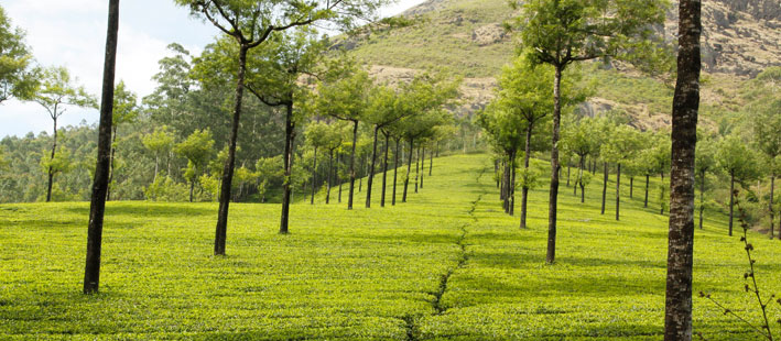coorg_guide