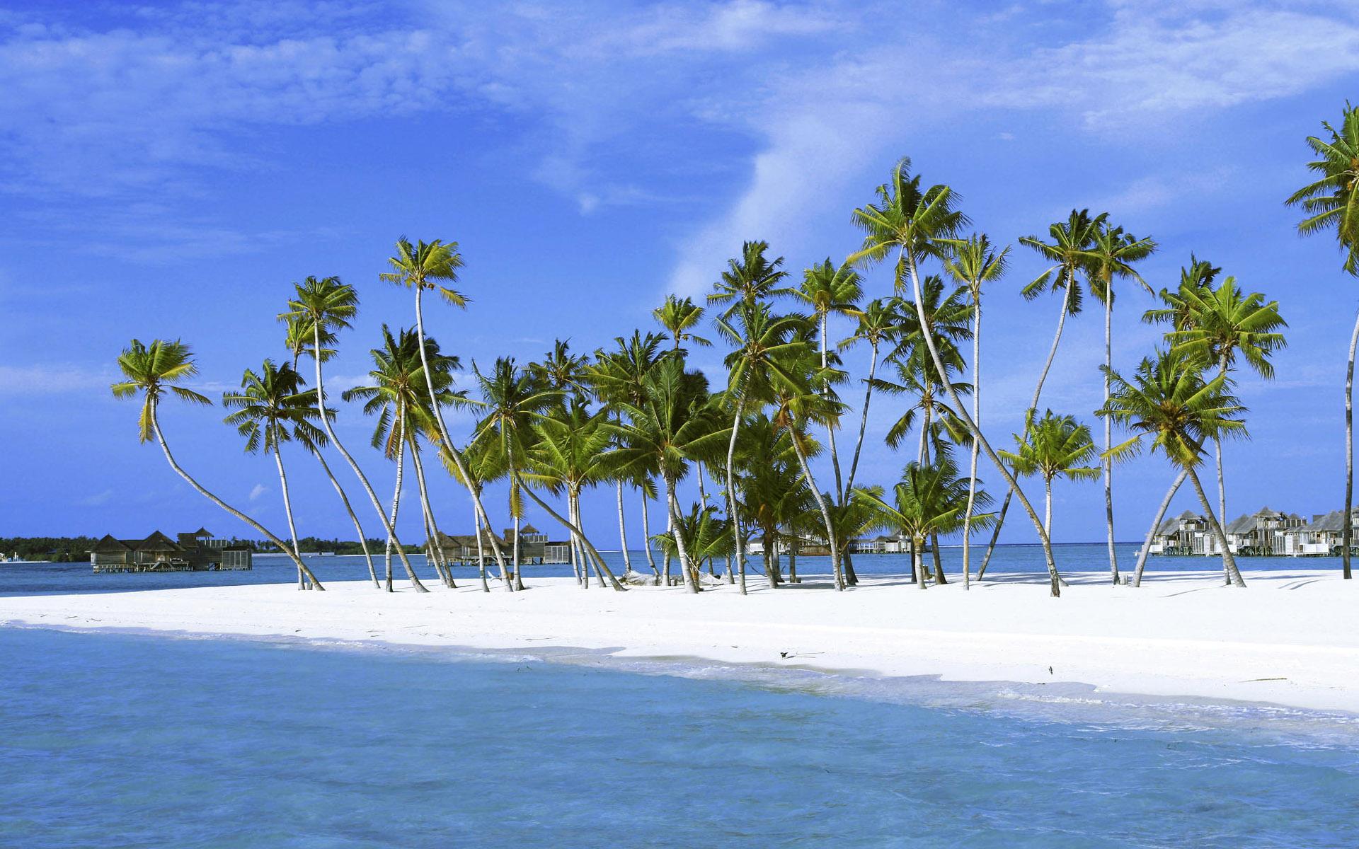Palmtree on Island, Maldives, Indian Ocean